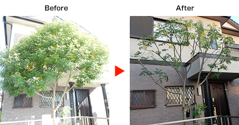 剪定の施工事例 神戸市