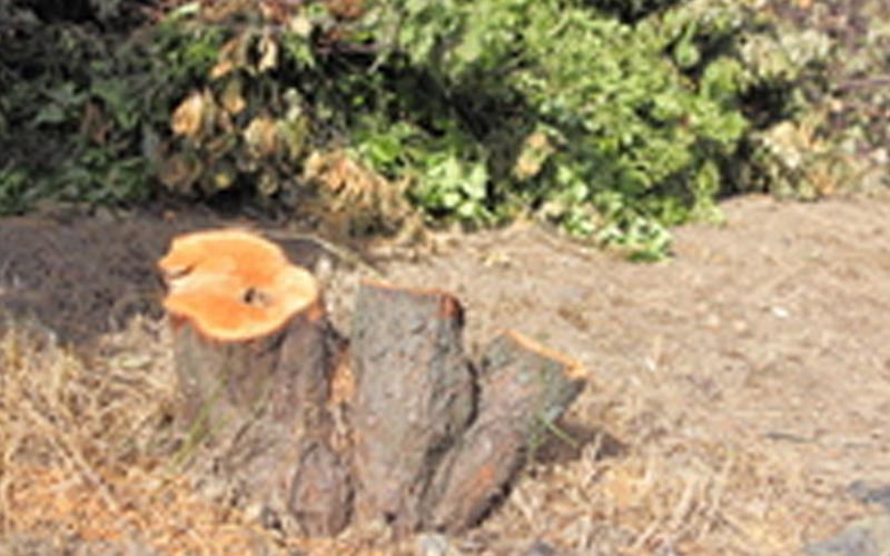 立木の伐採の作業
