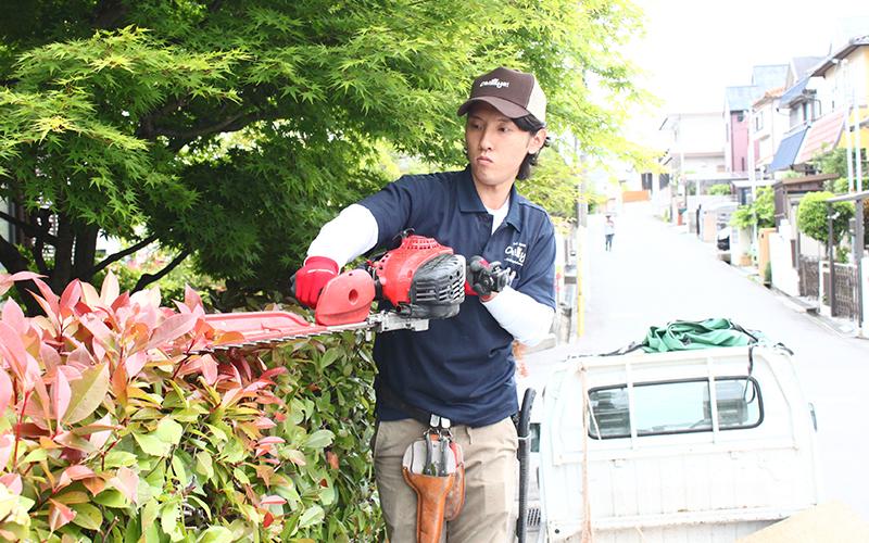 庭木・生垣の刈込みの作業