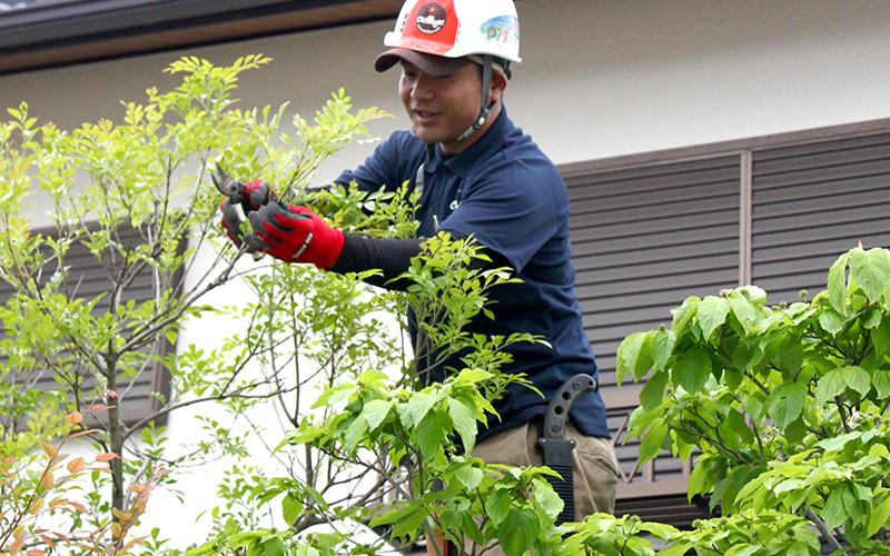 植木・庭木のお手入れ(剪定)の作業