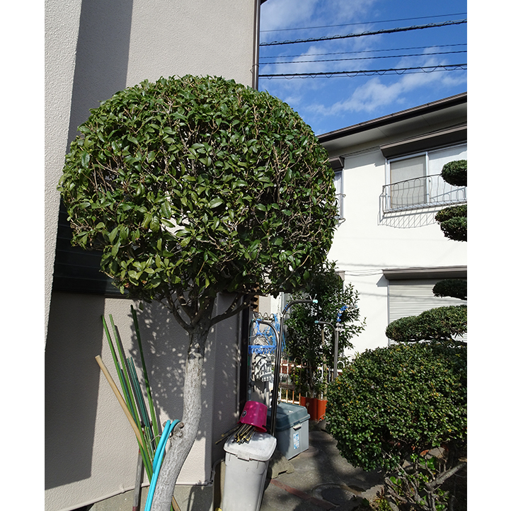 神戸市須磨区 S様邸その他の完成写真2