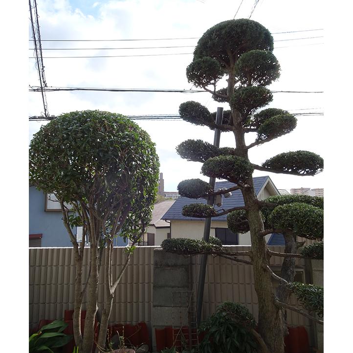 神戸市須磨区 S様邸その他の完成写真5