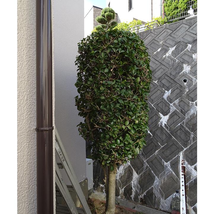 神戸市須磨区 S様邸その他の完成写真8
