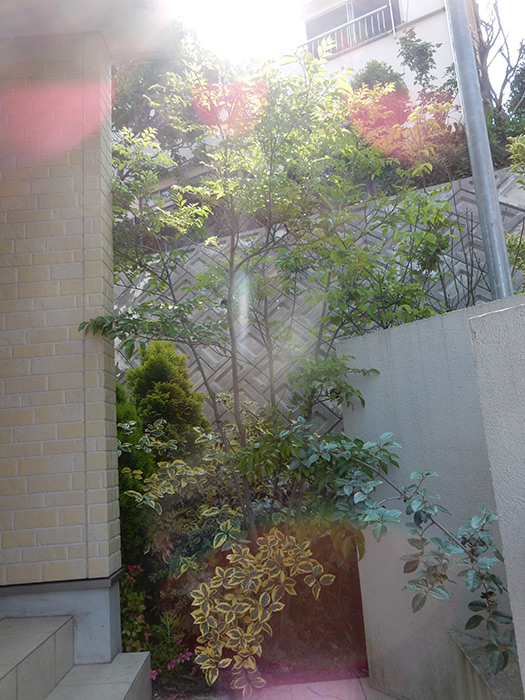 神戸市垂水区 N様邸 のビフォー画像4