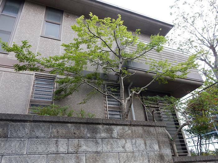 神戸市須磨区 F様邸 のアフター画像1