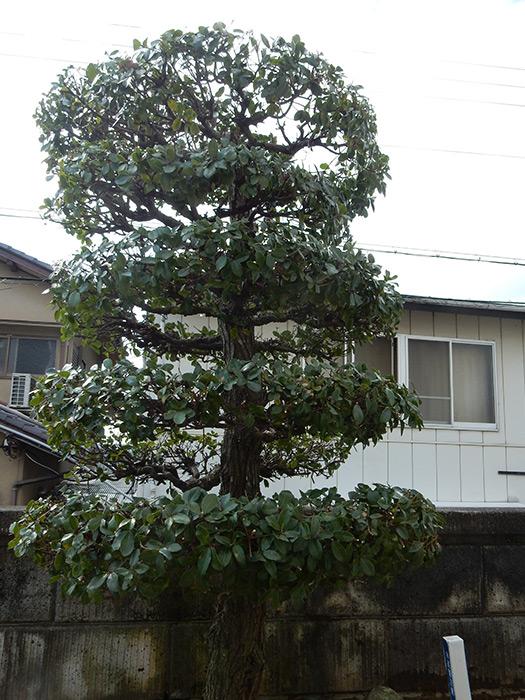 神戸市西区 N様邸 のアフター画像2