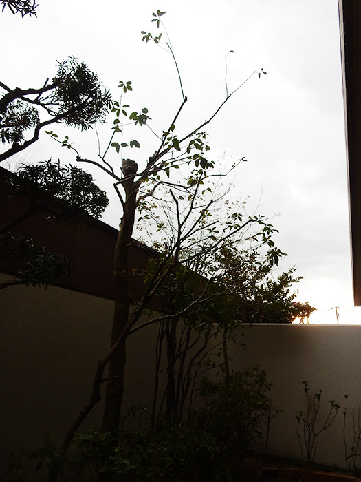神戸市須磨区 K様邸 のアフター画像2