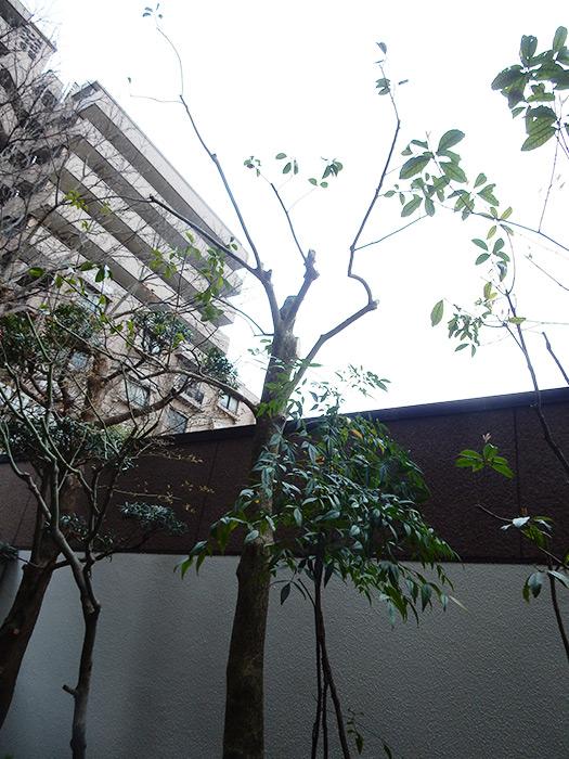 神戸市須磨区 K様邸 のアフター画像3