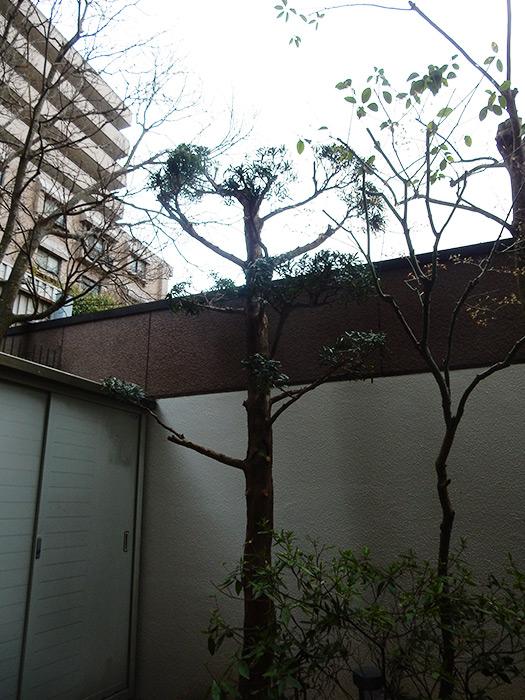 神戸市須磨区 K様邸 のアフター画像5