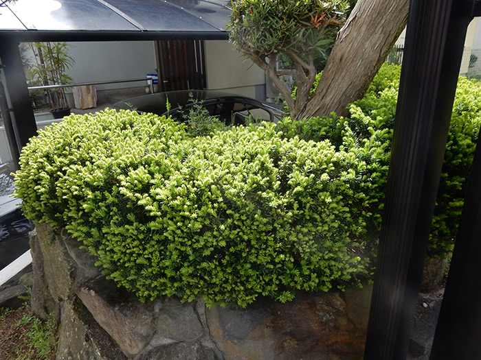 神戸市垂水区 N様邸 のビフォー画像3