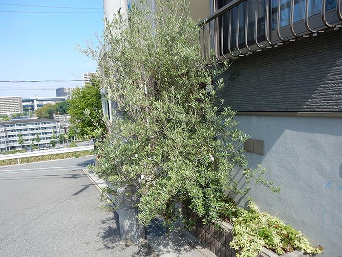 神戸市垂水区 M様邸 のビフォー画像1
