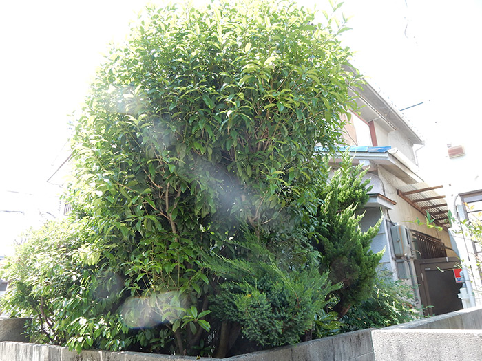 神戸市垂水区 O様邸 のビフォー画像3