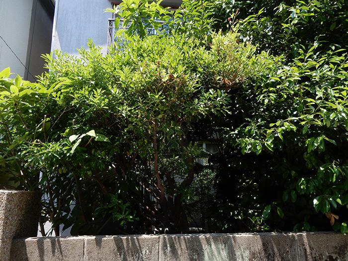 神戸市垂水区 O様邸 のビフォー画像6