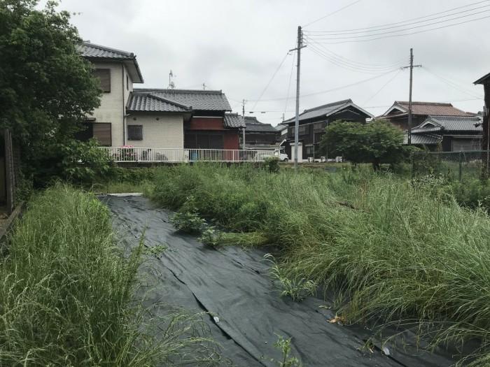 神戸市西区 T様邸 生垣刈込 のビフォー画像2