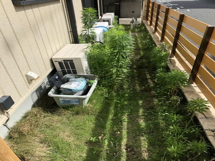 神戸市西区N様邸 除草作業 のビフォー画像3