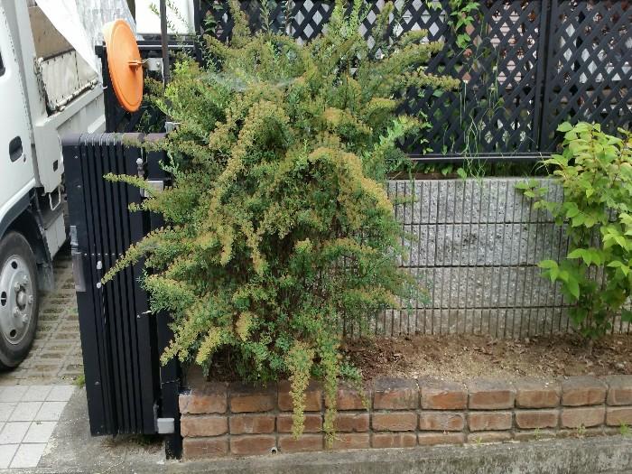 神戸市北区S様邸 お庭のお手入れ のビフォー画像2