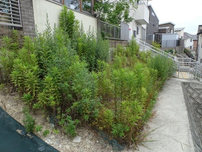 神戸市垂水区N様邸 防草対策 のビフォー画像1