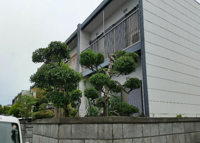 神戸市須磨区K様邸 お庭のお手入れ のアフター画像1