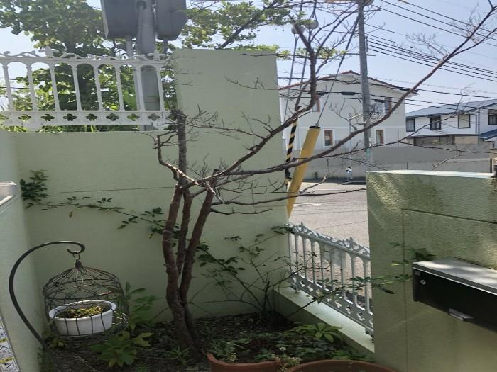 神戸市西区H様邸 伐採他作業 のビフォー画像3
