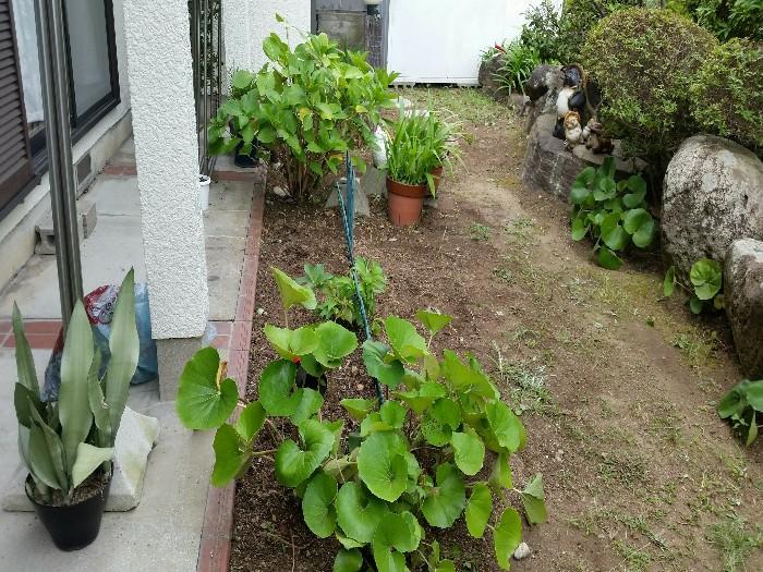 神戸市垂水区T様邸 お庭のお手入れ のアフター画像1