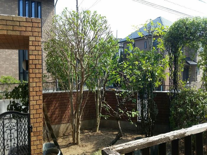 神戸市西区 N様邸お庭のお手入れ のアフター画像3