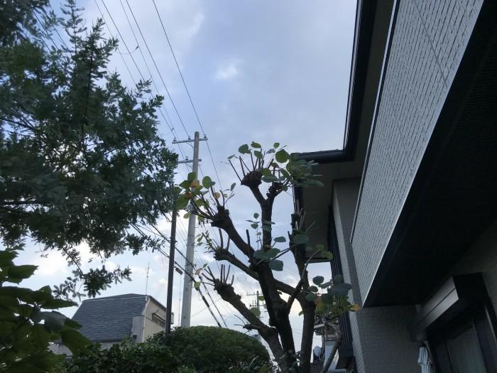 神戸市須磨区T様邸 お庭のお手入れ のアフター画像2