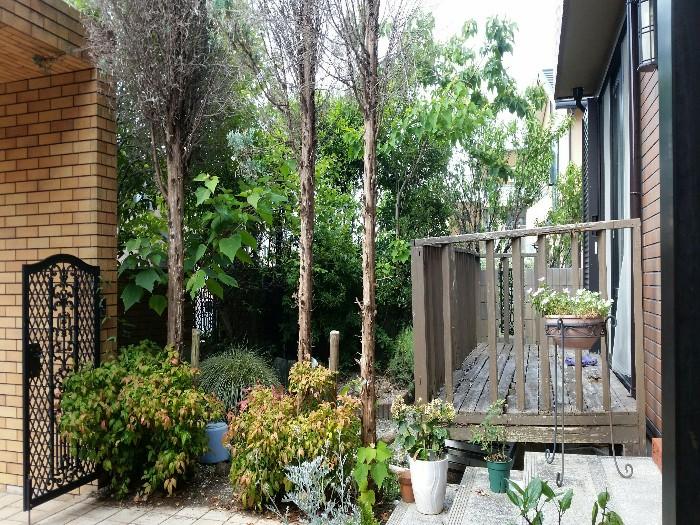 神戸市西区 N様邸お庭のお手入れ のビフォー画像2