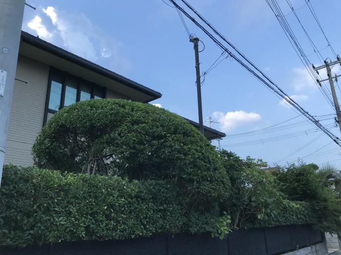 神戸市須磨区T様邸 お庭のお手入れ のアフター画像1