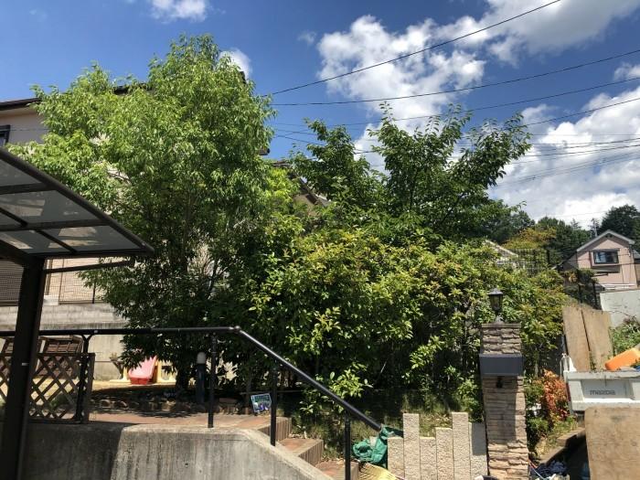 神戸市北区K様邸お庭のお手入れ のビフォー画像1