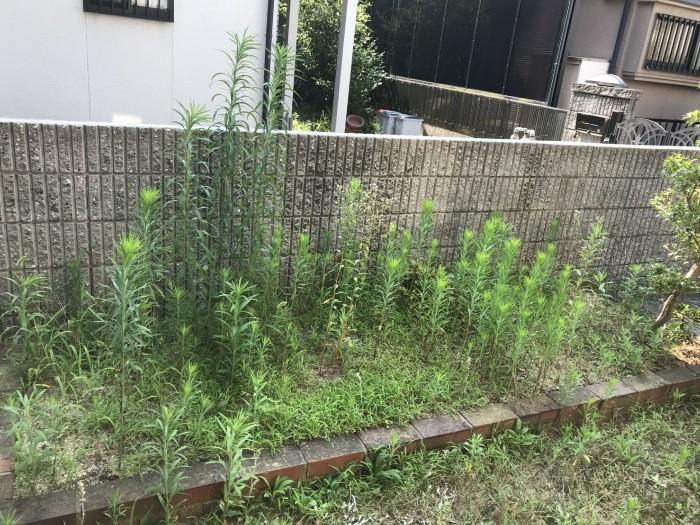 神戸市西区K様邸 草刈作業 のビフォー画像1