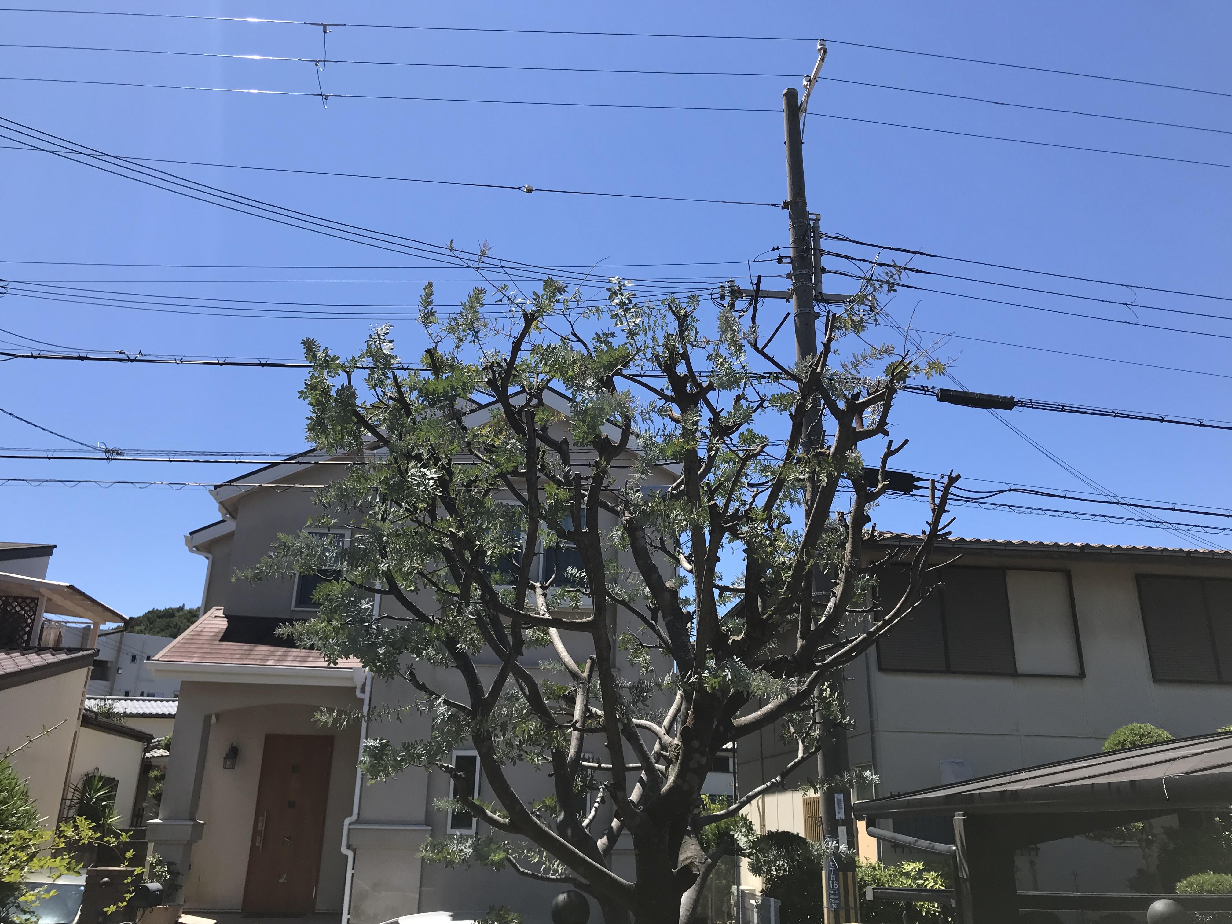 神戸市 T様邸 のアフター画像2
